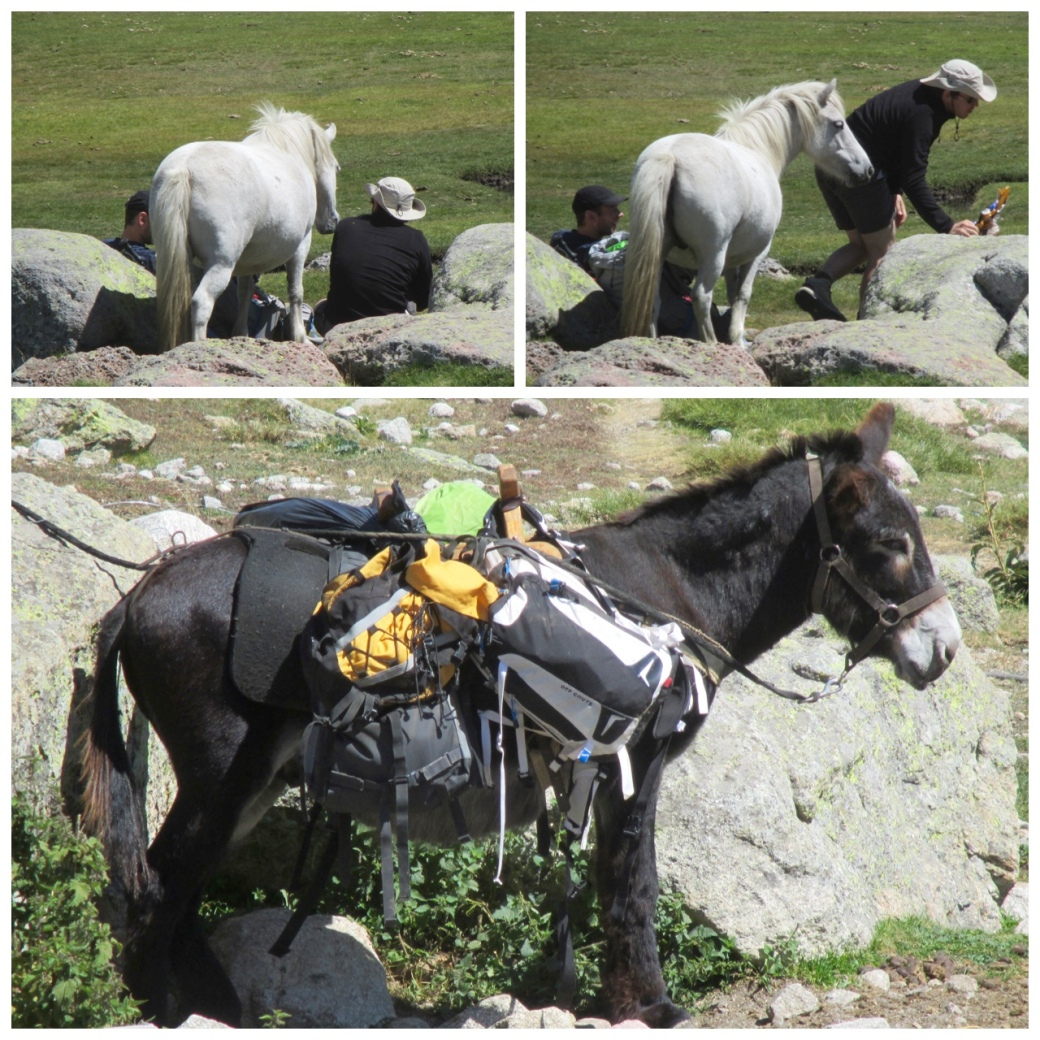 Horses on the GR20. Watch your lunch