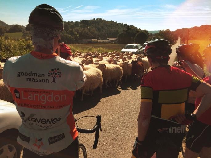 Watch where ewe go
