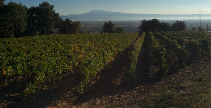 Morning mist under Mont Ventoux